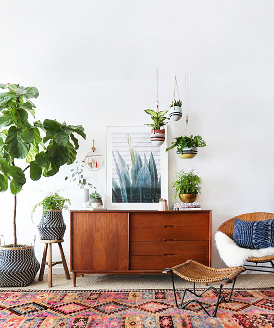 Modern Living Room Indoor Plants