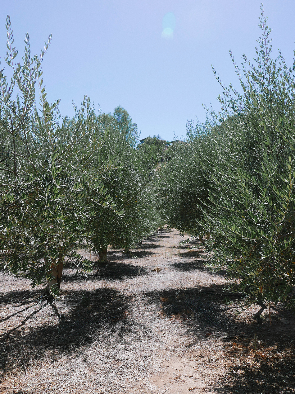 ojai-olive-oil
