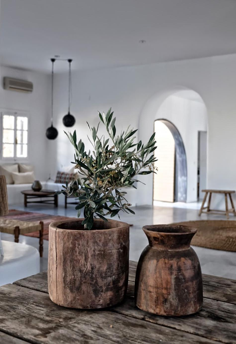 Indoor Olive Trees